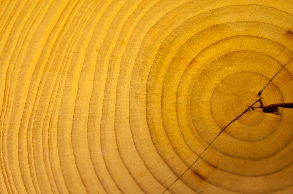 anelli-tronco
