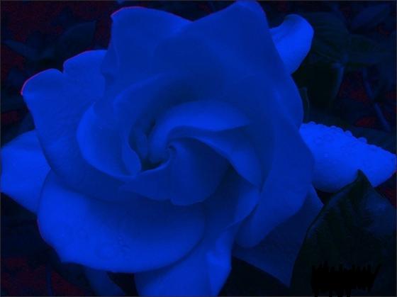 centro benessere blue gardenia ferrara